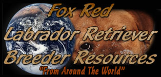 Fox Red Labrador Retriever Breeder Resources